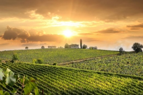 Your Chianti Wine Tours From Florence Chianti Classico