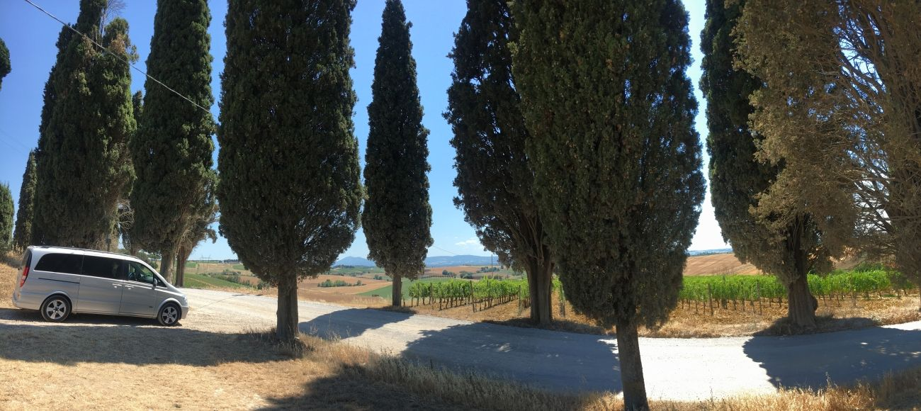 Tuscan Cypress Trees and Vineyards for your Cortona and Montepulciano Wine Tour